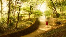 de zon door het bos Royalty-vrije Stock Foto's