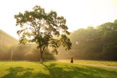 de zon door het bos Royalty-vrije Stock Afbeeldingen