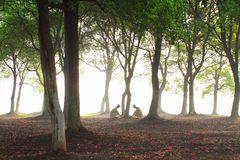 de zon door het hout Stock Afbeeldingen