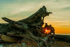 De zon in een val Royalty-vrije Stock Afbeelding