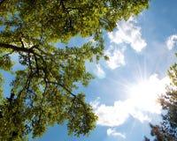 De zon en de boom van de hemel Stock Afbeeldingen