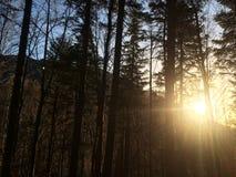 De zon en het bos royalty-vrije stock fotografie