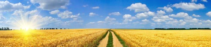 De zon en het gebiedshoogtepunt van de pret van tarwe Stock Foto's