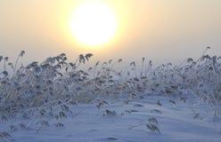 De zon en het gras van de winter Stock Afbeelding
