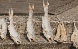 In de zon gedroogde Vissen Royalty-vrije Stock Afbeeldingen