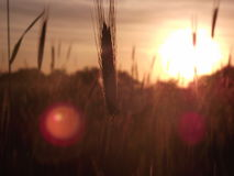 De zon glanst Stock Afbeelding