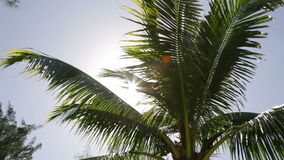 De zon glanst achter een palm stock video