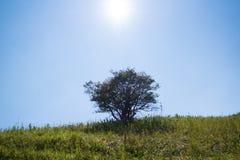 De zon glanst de boom Stock Afbeeldingen