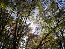 De zon glanst door de bladeren royalty-vrije stock foto