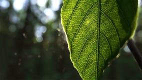 De zon glanst door bladeren stock videobeelden