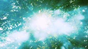 De zon glanst door de bladeren en de mist Rook in het bos Magische bos stock video