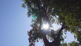 De zon glanst door de bomen stock videobeelden