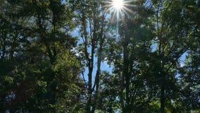 De zon glanst door bomen stock videobeelden