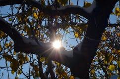 De zon glanst door bomen Royalty-vrije Stock Foto's
