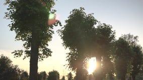 De zon glanst door de bomen, gradiënthemel op de achtergrond stock videobeelden