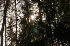 De zon glanst door bomen royalty-vrije stock foto