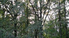 De zon glanst door boomgebladerte in vergankelijk bos stock video