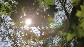 De zon glanst door de bomen stock footage
