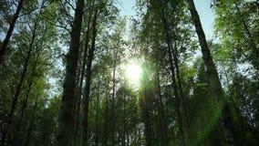 De zon glanst door de bomen 4K stock footage