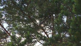De zon glanst door de bomen 4K stock videobeelden