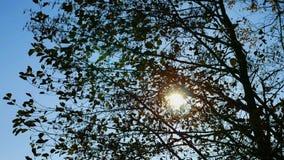 De zon glanst door de takken van boom 4K stock videobeelden
