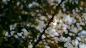 De zon glanst door de takken van boomclose-up stock videobeelden