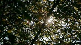 De zon glanst door de takken van boomclose-up stock footage