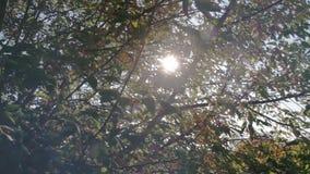 De zon glanst door de takken van boomclose-up stock video