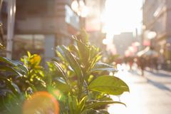 De zon glanst door groen doorbladert bij overvolle straat stock foto's
