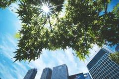 De zon glanst door de groene bladeren royalty-vrije stock foto's