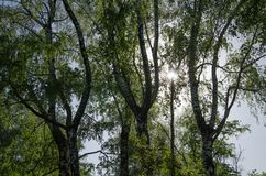 De zon glanst door groene bomen royalty-vrije stock foto's