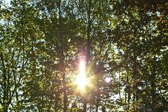 De zon glanst door het bos stock fotografie