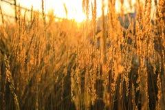 De zon glanst door het gras Royalty-vrije Stock Afbeelding