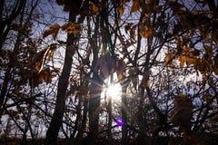 De zon glanst door de naakte bomen in de lente Stock Foto