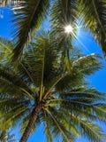 De zon glanst door palmbladeren Stock Foto's