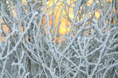 De zon glanst door takken van de bomen met sneeuw worden behandeld die royalty-vrije stock foto's