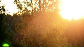 De zon glanst en boom stock footage