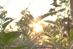 De zon glanst en de het groeien installatie in landbouwbedrijf stock fotografie