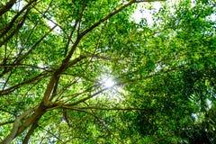 De zon glanst warm door de luifel van bomen in het hout Stock Foto