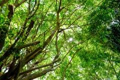 De zon glanst warm door de luifel van bomen in het hout Royalty-vrije Stock Afbeeldingen