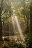 De zon glanst wierp de bomen Stock Foto's