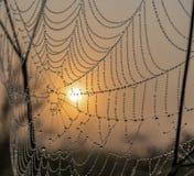 De zon in het Web royalty-vrije stock foto