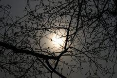 De zon in de mist en de Herfstbomen zonder bladeren Stock Foto