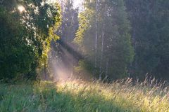 De zon` s stralen bij zonsopgang Royalty-vrije Stock Fotografie