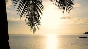 De zon` s stralen die door de palm overgaan vertakken zich Tropische bomen op de tijd van de kustzonsondergang stock footage