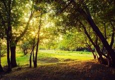 De zon` s stralen maken hun manier door de bomen royalty-vrije stock foto's