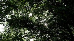 De zon` s stralen maken hun manier door de takken van bomen stock videobeelden