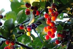 De zon steekt elk fruit aan stock afbeelding