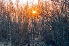 De zon in de struiken stock afbeelding