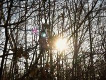 De zon in takken Royalty-vrije Stock Afbeelding